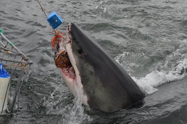 Aussie Jaws Splash